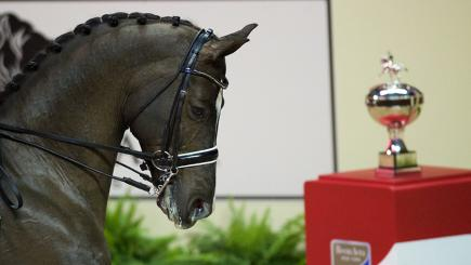 Valegro's incredible partnership with Dujardin continued in Vegas (Image: Arnd Bronkhorst Fotografie)